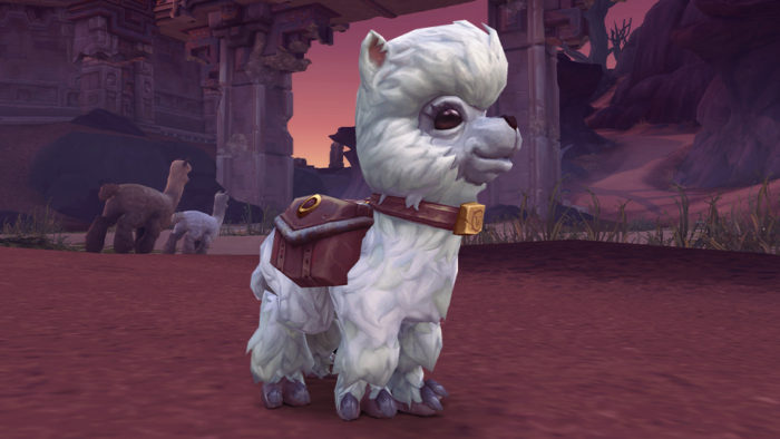Dottie, Blizzard Charity Pet for 2019